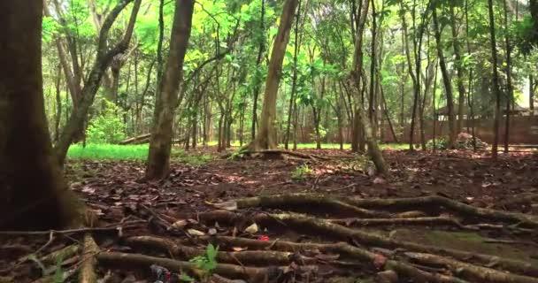 Zelený les s kořeny na zemi