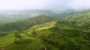 Amazing aerial view of tea plantations