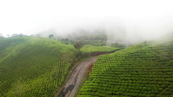 Beautiful aerial view of misty morning at tea plantation in Bandung regency, West Java, Indonesia. Shot in 4k resolution