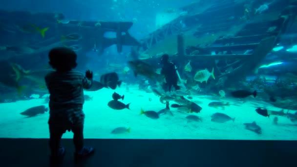 Singapore. 05. Dezember 2017: Videoaufnahmen eines kleinen Jungen, der sich überfüllte Fische und einen Taucher in s.e.a. ansieht Aquarium im Marine Life Park, Singapore