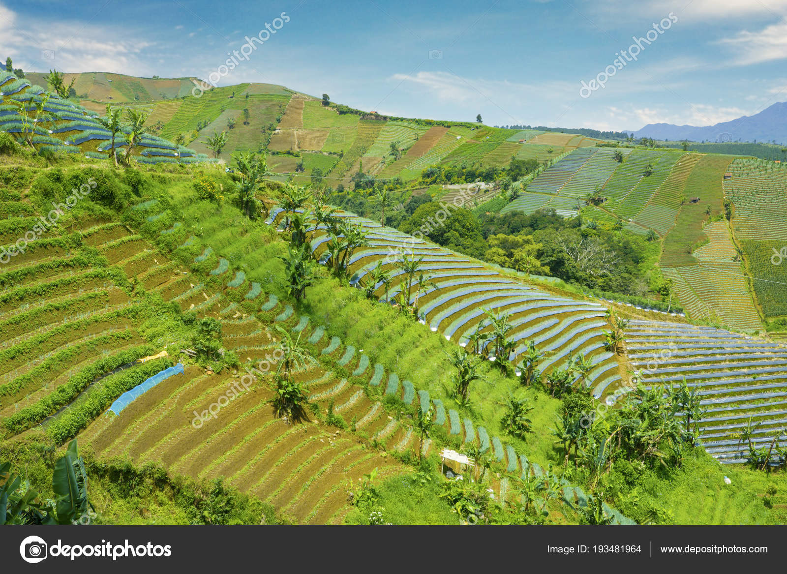 depositphotos_193481964-stock-photo-terraced-fields-in-majalengka Info Landscape Photography Keywords Now Guide @capturingmomentsphotography.net