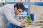 Fotografia biologo con erba in laboratorio