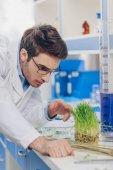 Fotografia biologo che lavora con erba in laboratorio
