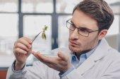 Fotografia biologo esamina pianta in pinzette
