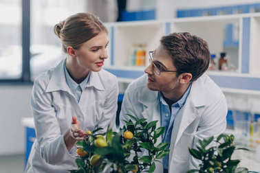biologists with lemon plants in laboratory