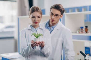 Chemists in white coats holding fern plant in laboratory stock vector