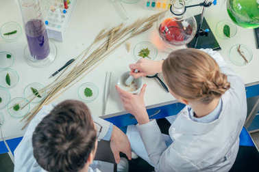 biologists working with petri dishes