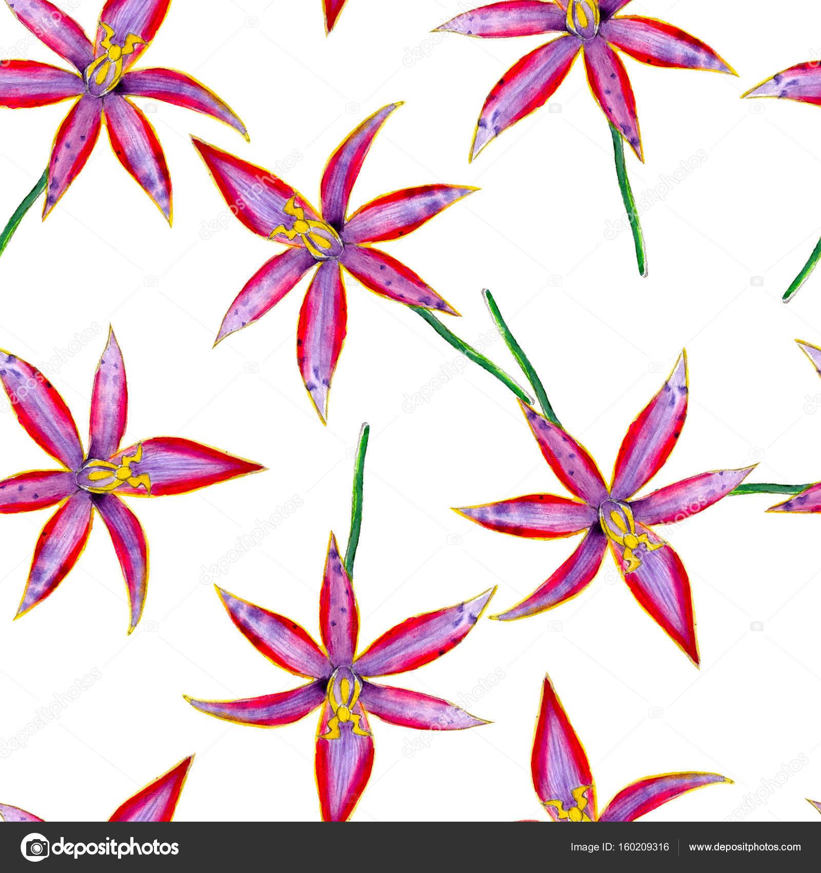 Flor de la orquídea australiano acuarela de patrones sin fisuras ...