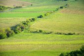 Photo View of a vineyard in the Palava region of South Moravia on a sunny spring day