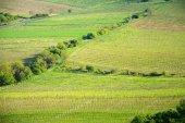 Pohled na vinice v oblasti Pálavu z jižní Moravy na slunečný jarní den