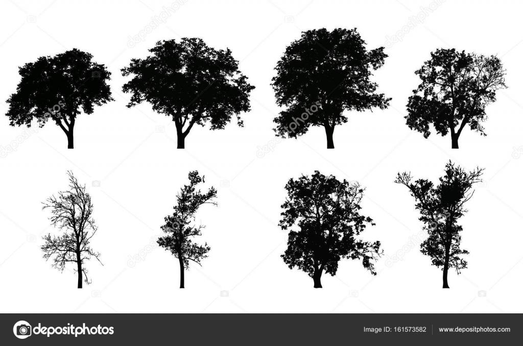 Immagini di alberi realistici