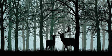 Vector illustration of deer and hind standing on grass