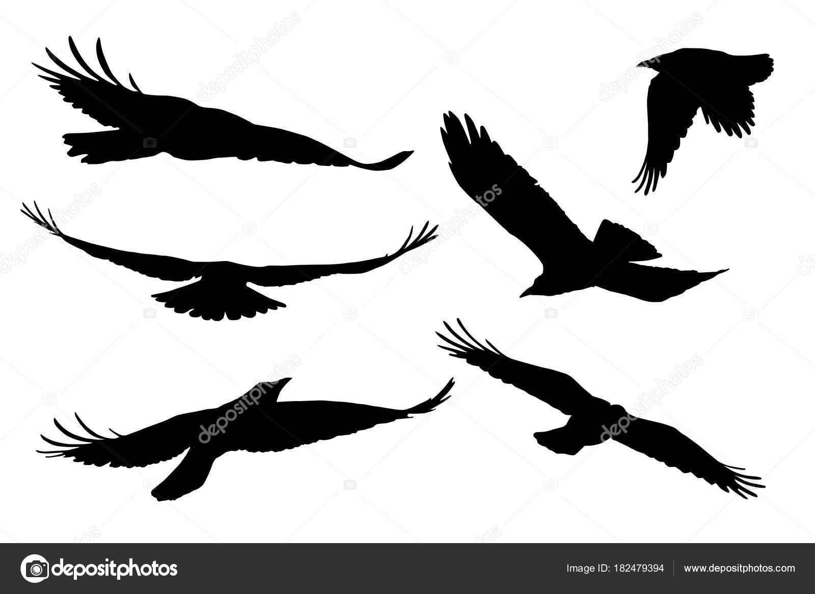 飛んでいる鳥のシルエットを現実的なベクトルをセットします