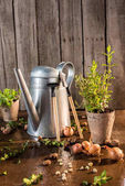 Photo watering can and garden tools