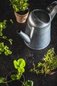 frische grüne Pflanzen