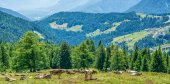 Fotografie Kühe auf der grünen Wiese mit schöner Landschaft bei Ultimo Tal, Südtirol, Italien