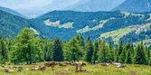 Fotografia Mucche su un campo verde con uno splendido scenario a Val dUltimo, Alto Adige, Italia