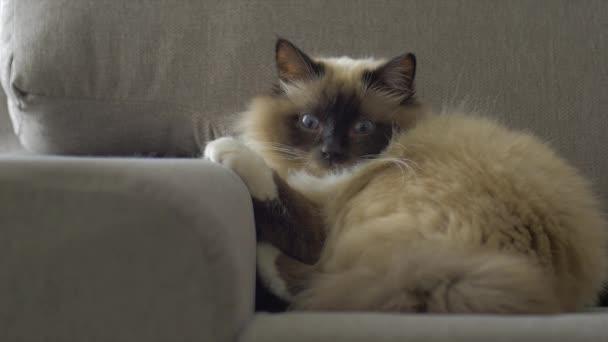 Dlouhé kočička videa