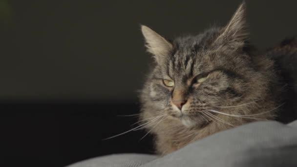 Krásná kočka ležící na pohovce doma a relaxační