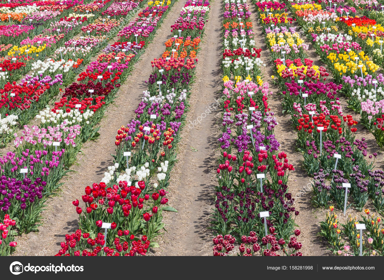Mostrar jardín con diversos tipos de coloridos tulipanes holandeses ...