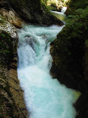 Wild part of Radovla river in the Vintgar Gorge near Bled