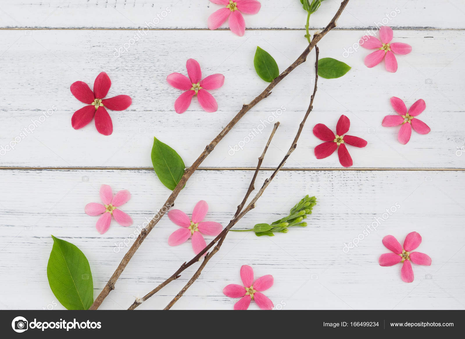 Pink And Red Flowers With Branch And Green Leaves Stock Photo