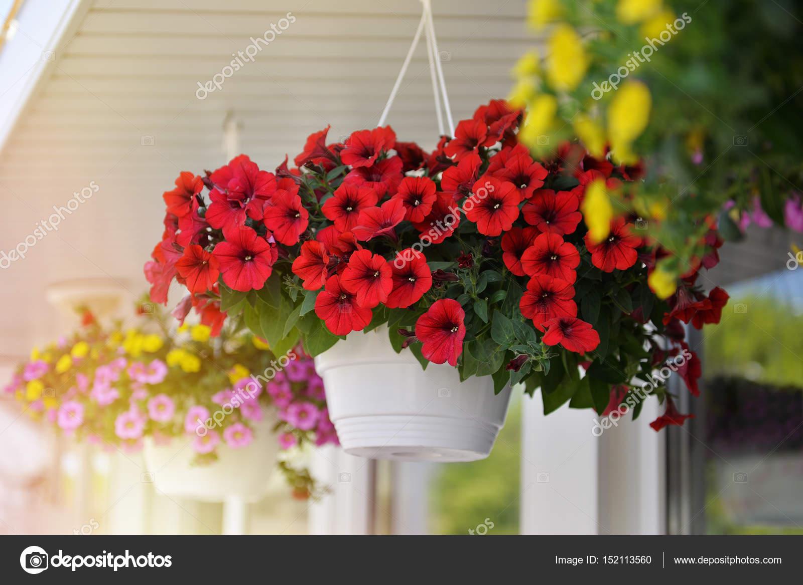 Cesti di fiori della petunia sul balcone per appendere for Fiori ornamentali