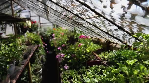 Malý dům skleník s květinami
