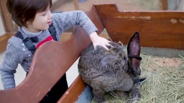 ein Kind streichelt ein riesiges dekoratives Kaninchen