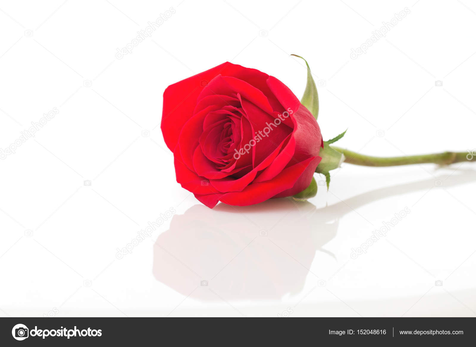 Image D Une Rose Rouge gros plan d'une rose rouge — photographie supitchamcadam © #152048616