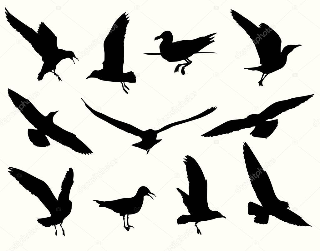 Seagull silhouette collection — Stock Vector © levente ...
