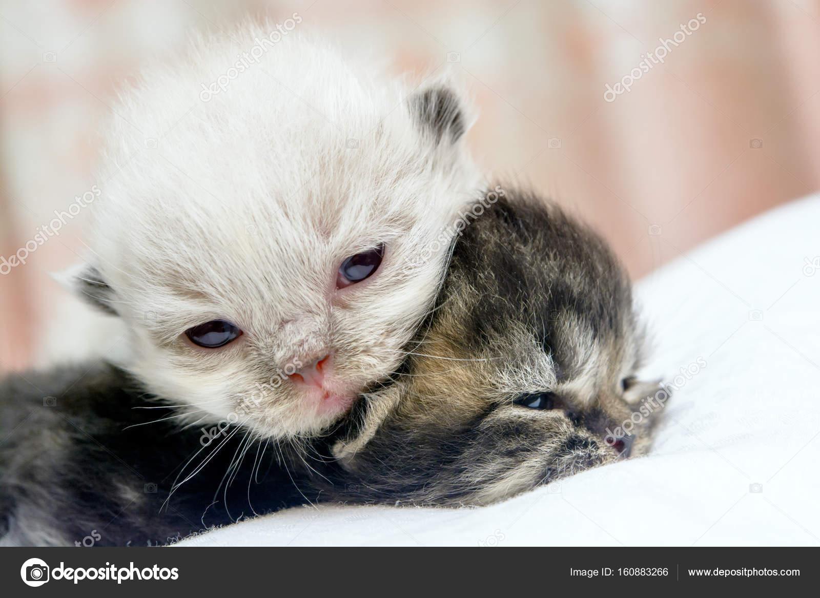 chaton mignon chat persan sur le lit photographie note kamutsri 160883266. Black Bedroom Furniture Sets. Home Design Ideas