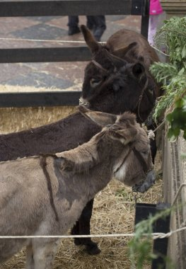 Donkeys in the enclosure
