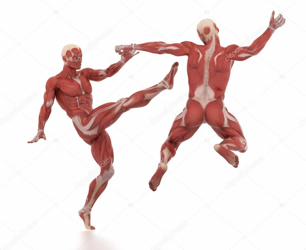 Anatomy Muscle Map White Isolated Fight Pose Stock Photo