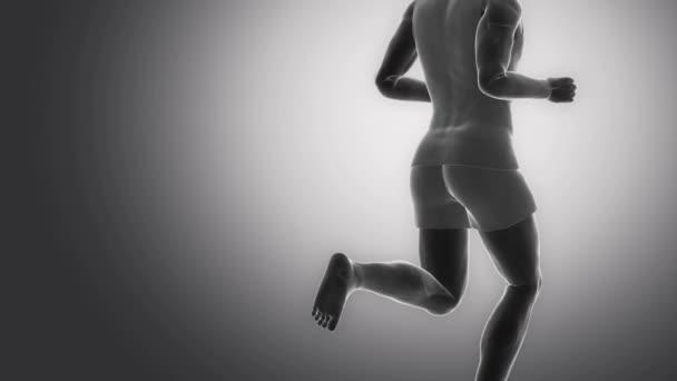 lidské hýžďový svaly