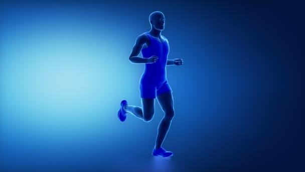 lidské nohy svaly