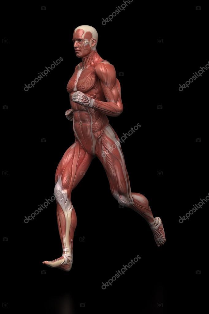 laufenden Mann Muskeln Anatomie — Stockfoto © CLIPAREA #125320584