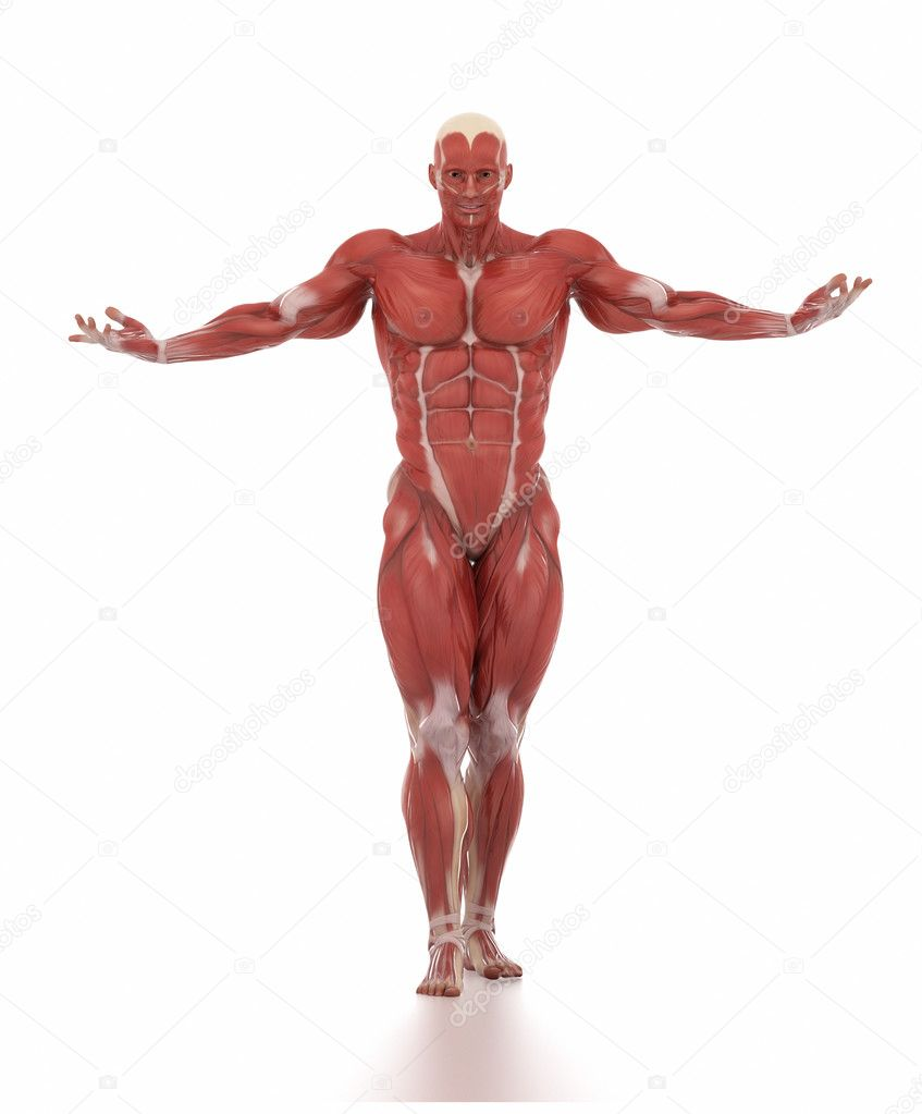 man muscle map anatomy — Stock Photo © CLIPAREA #125320766