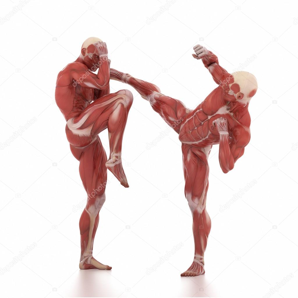 Männer-Kämpfer Muskeln Anatomie — Stockfoto © CLIPAREA #125320900