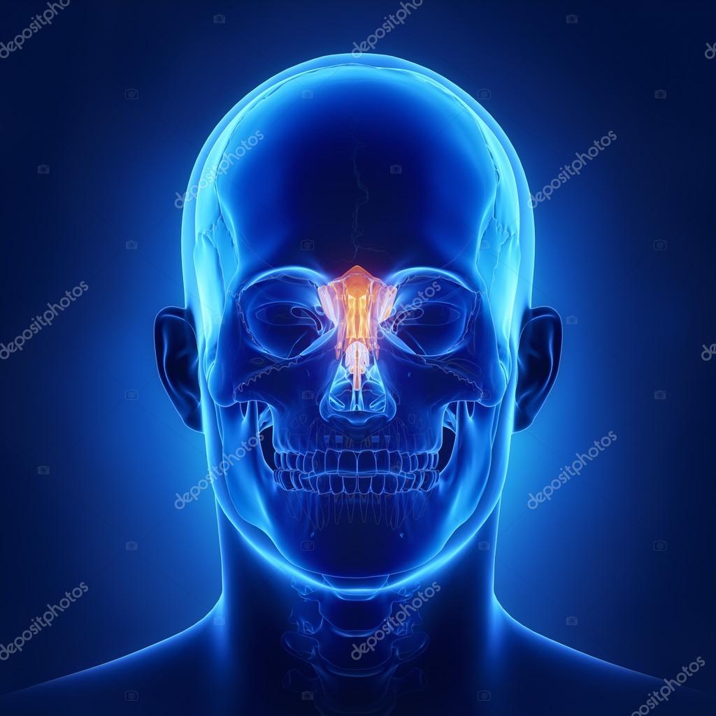 Siebbein Knochen, Schädel Anatomie — Stockfoto © CLIPAREA #125321616