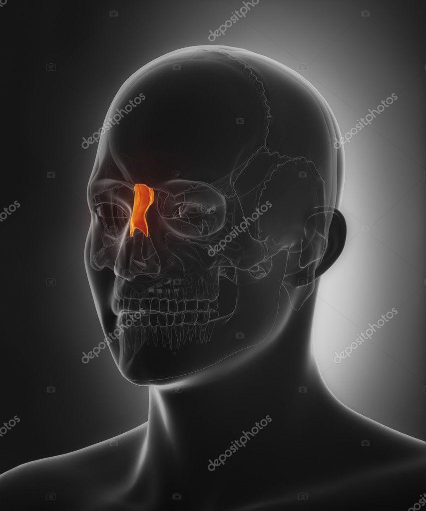 menschlicher Schädel Nasenbein — Stockfoto © CLIPAREA #125321714
