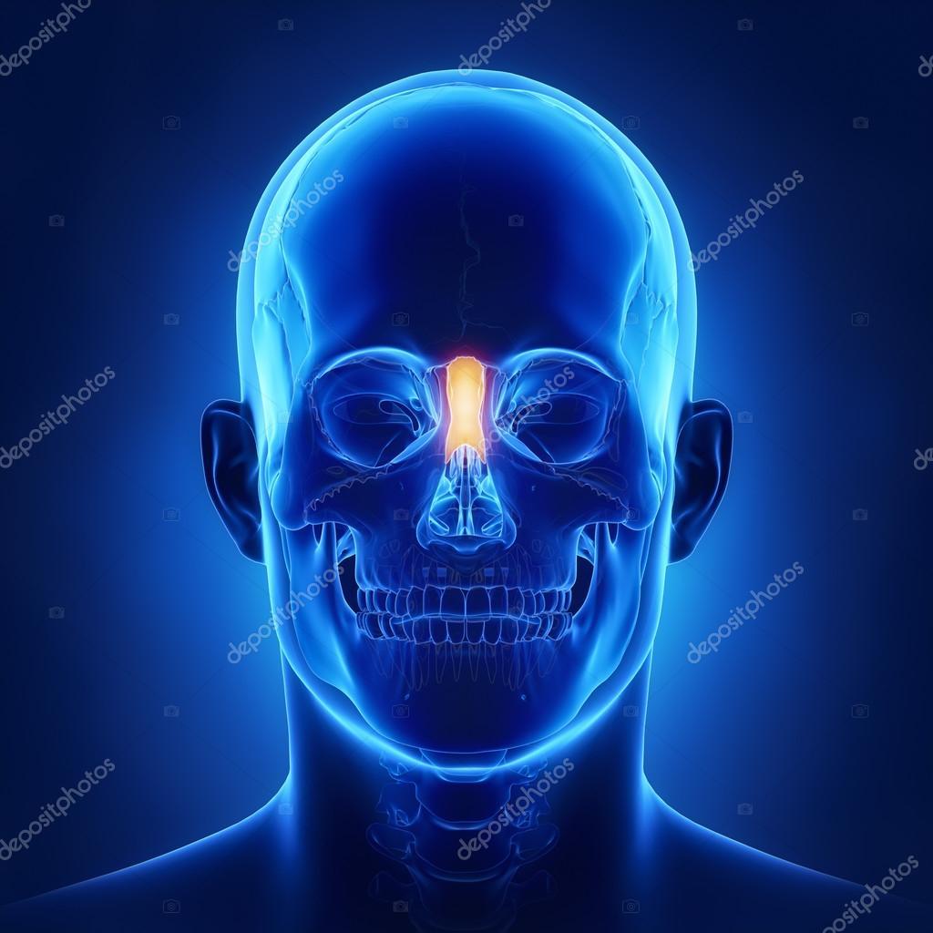 human skull Nasal bone — Stock Photo © CLIPAREA #125322372