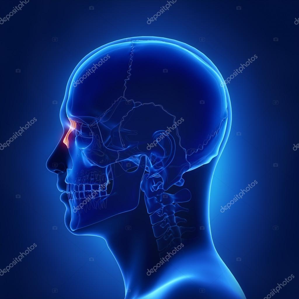 menschlicher Schädel Nasenbein — Stockfoto © CLIPAREA #125322376