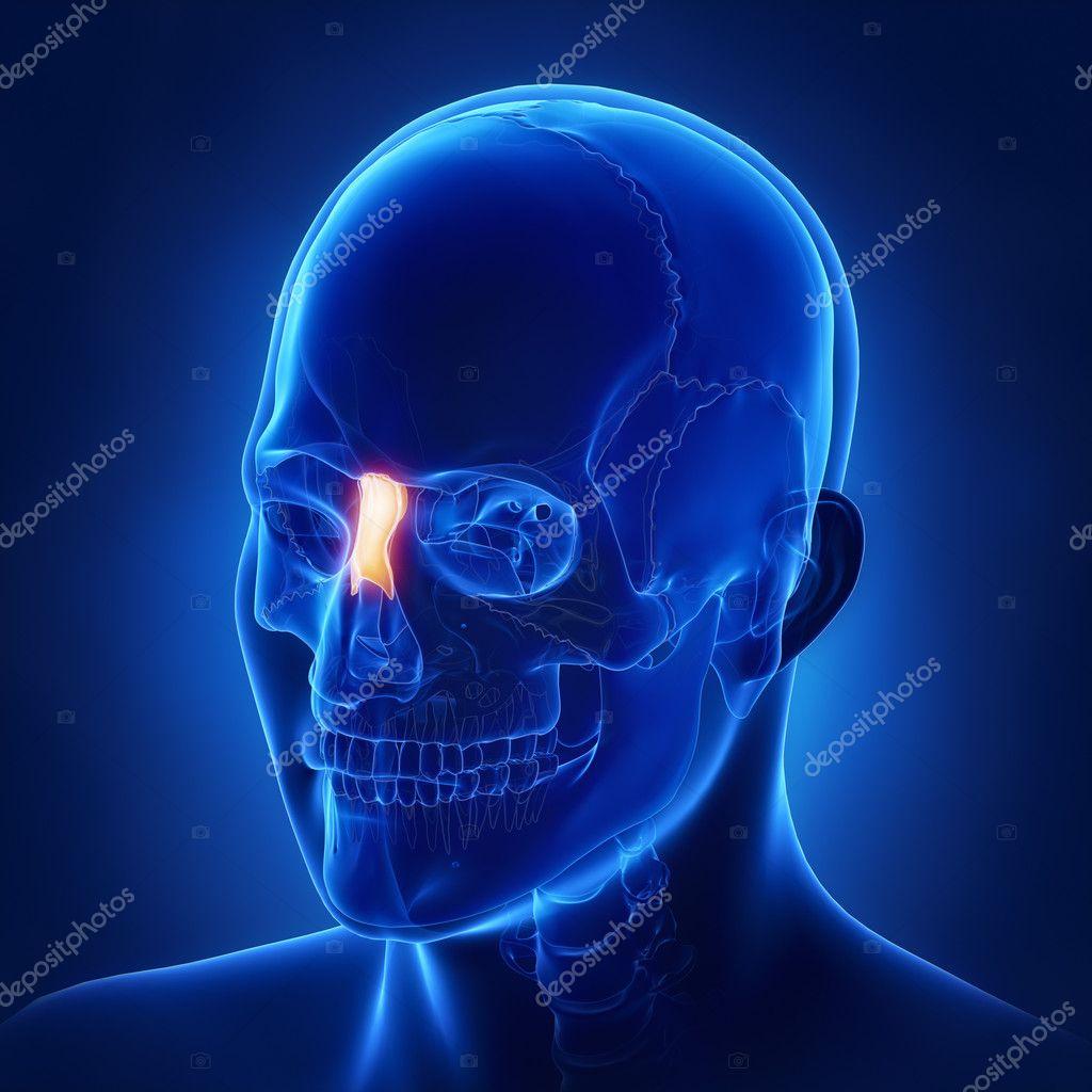 menschlicher Schädel Nasenbein — Stockfoto © CLIPAREA #125322382