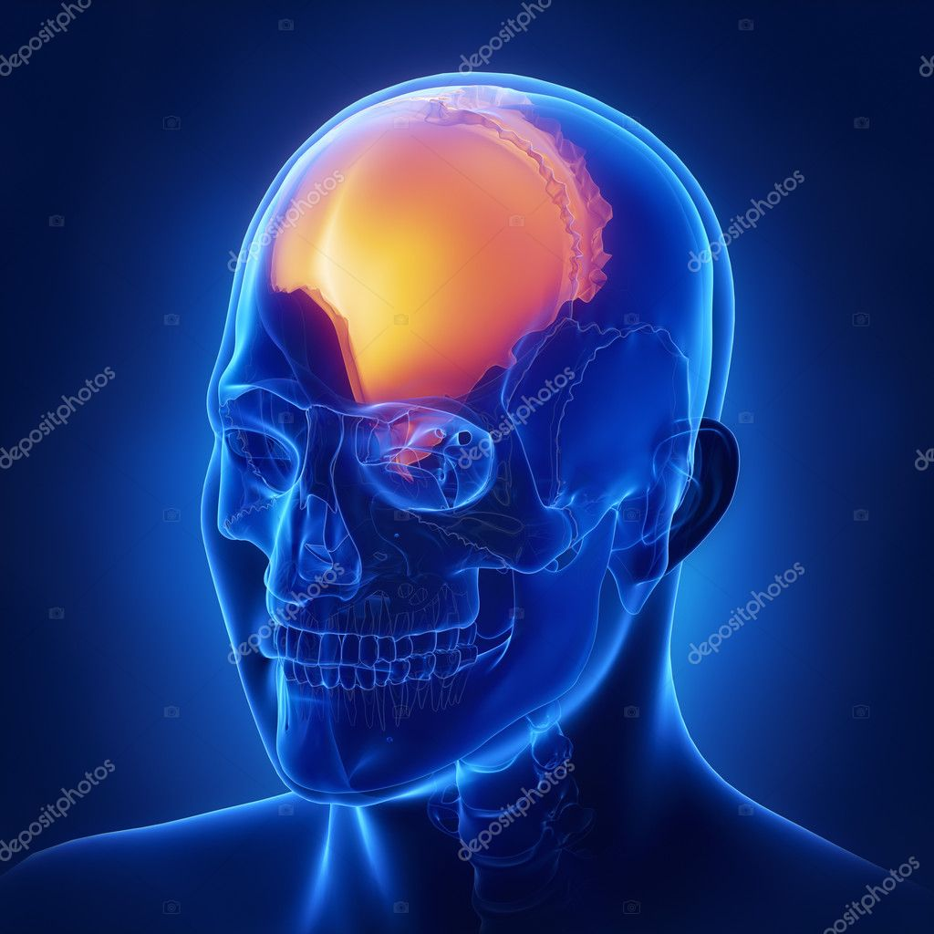 Right parietal bone anatomy — Stock Photo © CLIPAREA #125322542