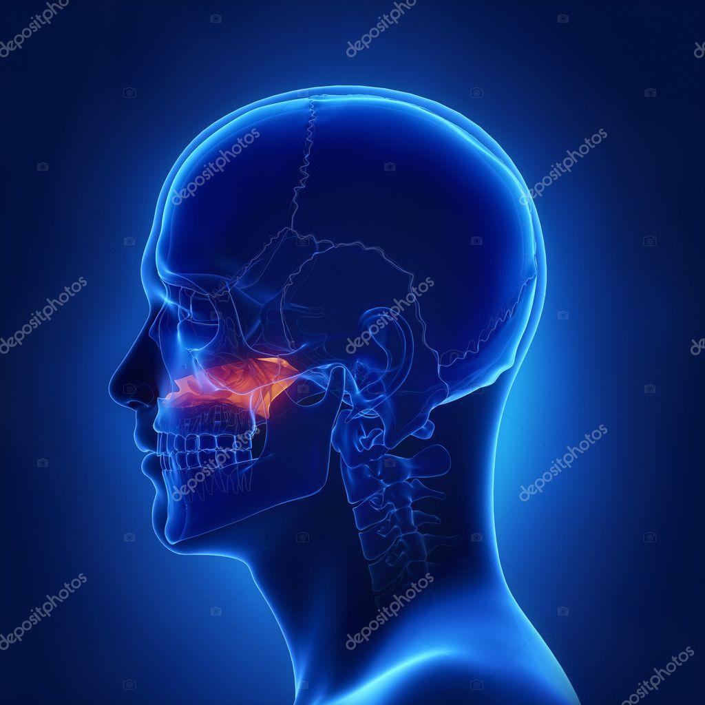 menschlicher Schädel Vomer Knochen — Stockfoto © CLIPAREA #125322598