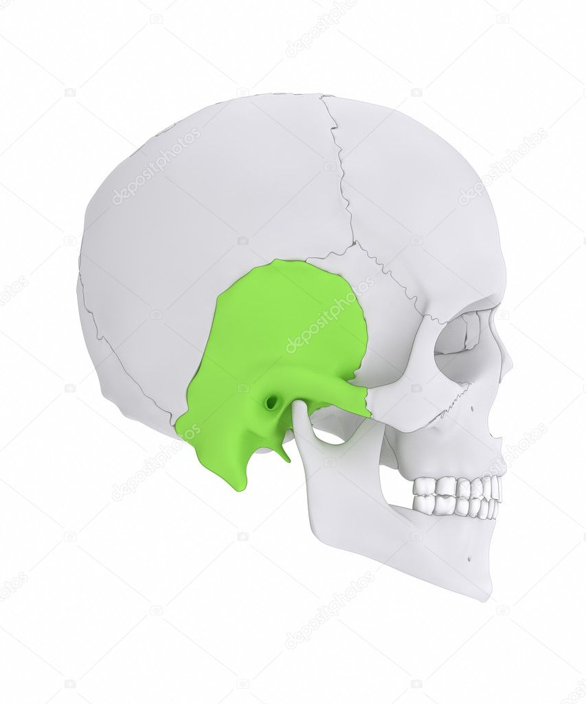 Temporal bone anatomy — Stock Photo © CLIPAREA #125322674