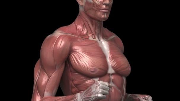 running man with muscular anatomy
