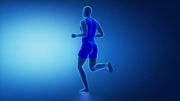 músculos semitendinoso humana — Vídeo de stock © CLIPAREA #125320500