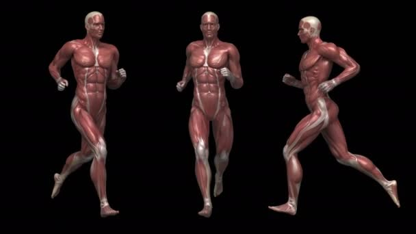 running man with muscular anatomy